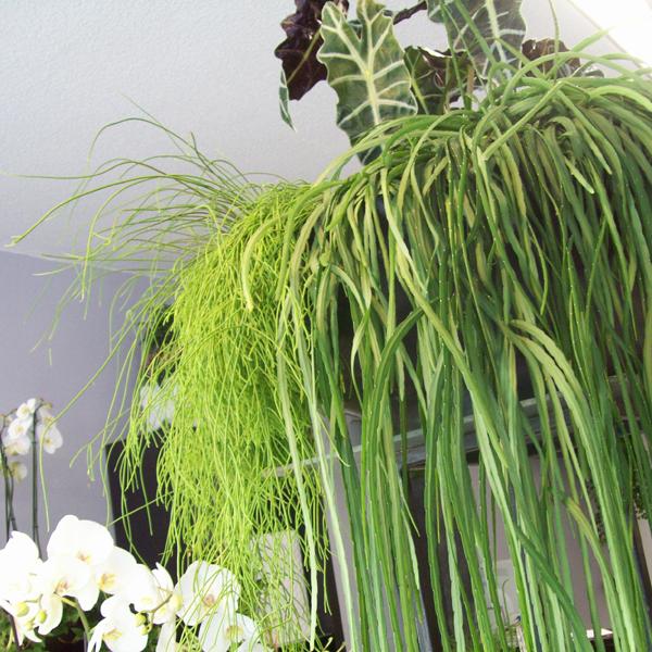 blumen rehse wuppertal bildergalerie blumen und pflanzen. Black Bedroom Furniture Sets. Home Design Ideas